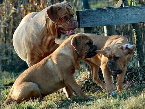 puppyles